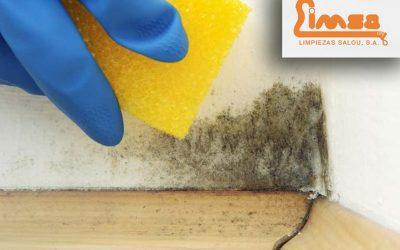 Remedios caseros para quitar el moho en paredes